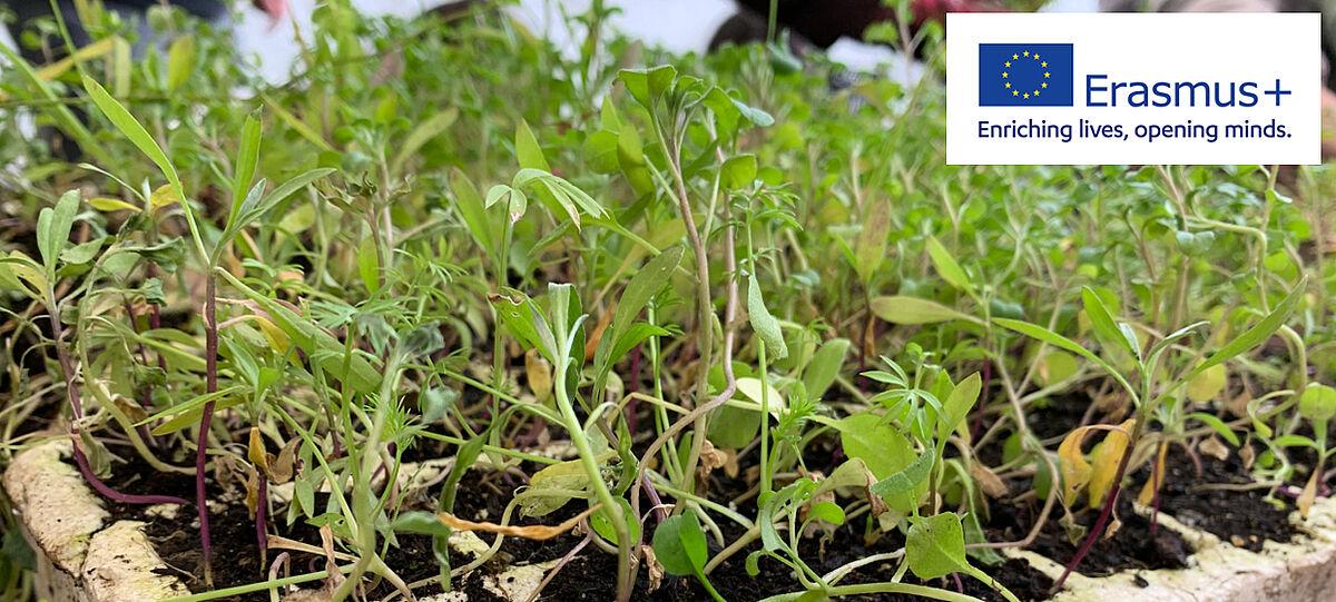 Erasmus+ Logo vor grünen Pflanzen-Setzlingen